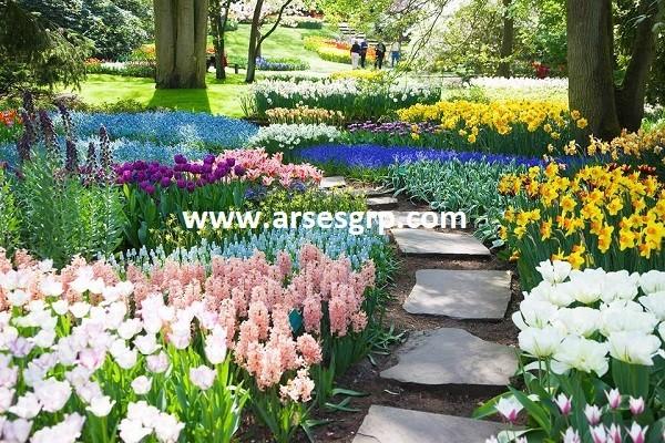 محوطه سازی حیاط با گل