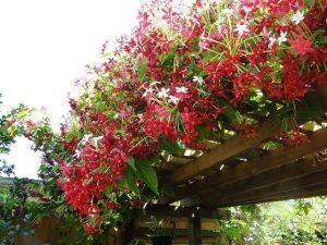 گیاهان محوطه سازی