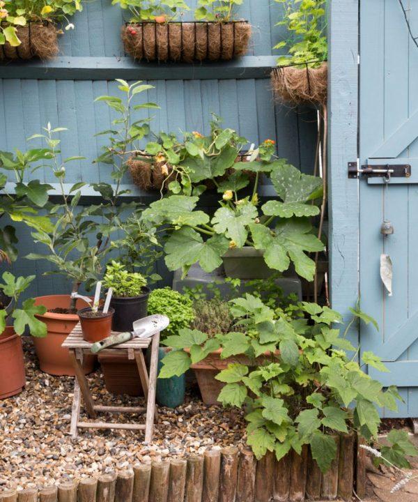 محوطه سازی و گیاهان