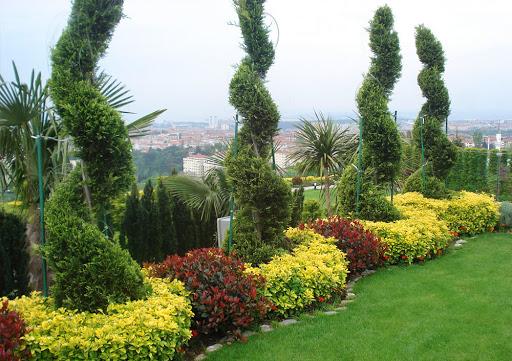 گیاهان در محوطه سازی